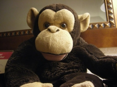 Tommy the Monkey, dubuc, voyages avec mon singe